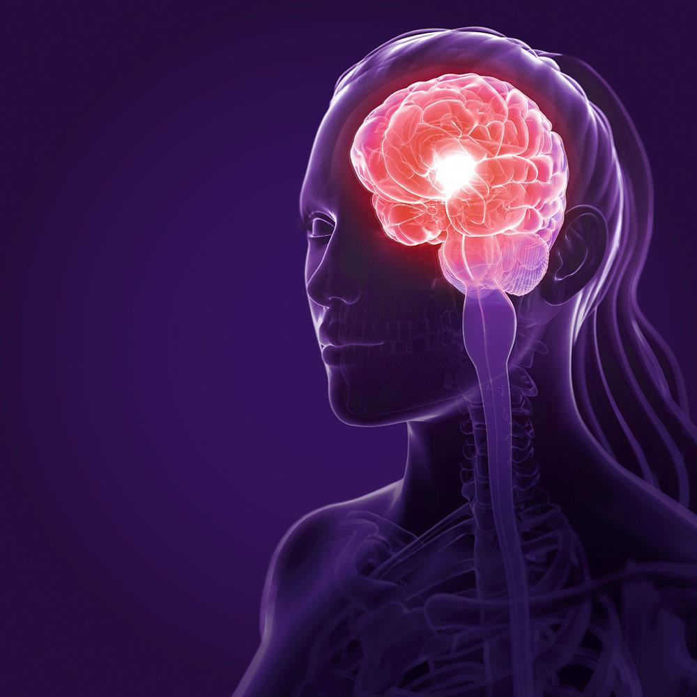 Seminar Unser Gehirn